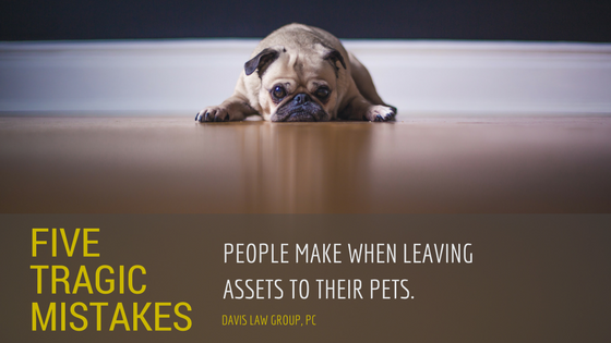 5 tragic mistakes people make when leaving their pet assets